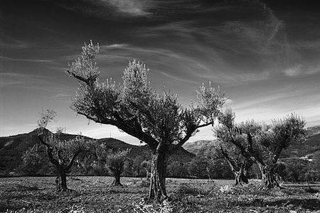 arboles-roc-de-pessalada-bn.jpg