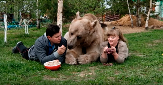 Hay un matrimonio en Rusia que tiene como mascota a un oso pardo de 350 kilos