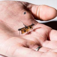 Este minúsculo insecto robot ya es capaz de volar sin batería (y lo puedes ver en vídeo a cámara lenta)