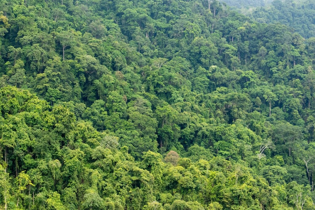 El Amazonas se vende a través de Facebook: anuncios ilegales con terrenos para deforestar de hasta 1.000 campos de fútbol