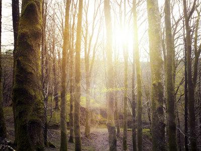 Sabemos que hay un 9% más de bosque en el mundo gracias a Google Earth