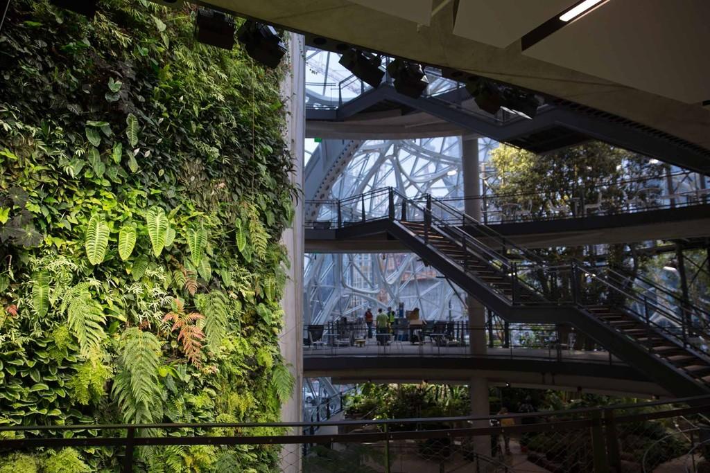 The Spheres Amazon 6