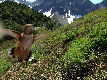 Paisaje bucólico con pájaro
