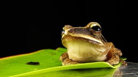Frog 173622 1920