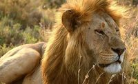 'All Creatures Great And Small' un proyecto en la línea de 'Parque Jurásico'