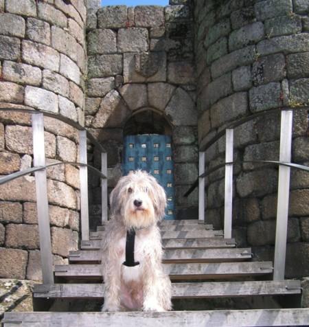 Turismo Rural Con Perro