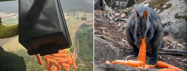 Australia está tan desesperada que ha comenzado a lanzar comida desde el aire a sus animales