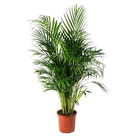 Plantas para exterior