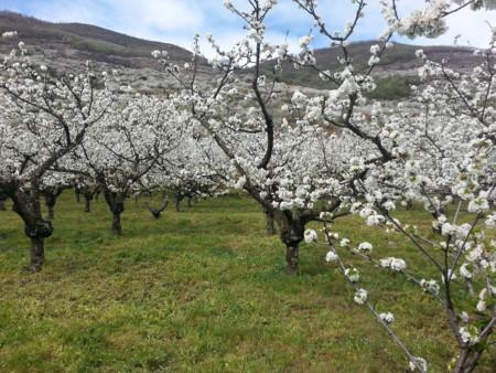 La ruta del Cerezo en Flor con la que querrás perderte en el Valle del Jerte