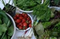 Las verduras con más hierro
