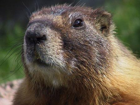 El día de la marmota en Canal+ Dcine