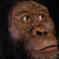 Un rostro que llena un hueco de tres millones de años: así era el antepasado de Lucy