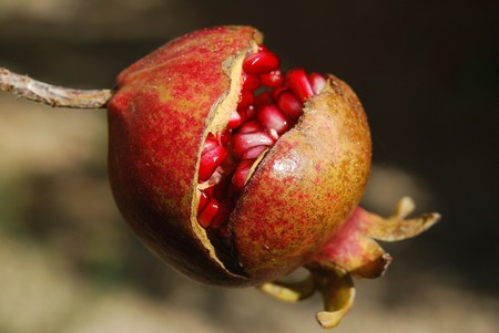 Pomegranate 185456 1920