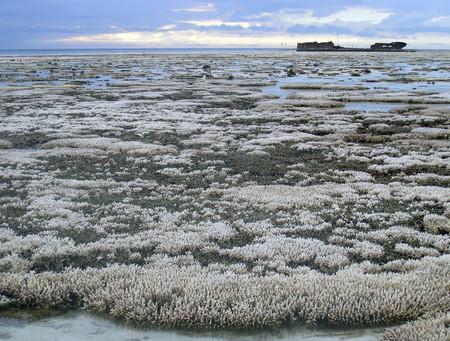 Blanqueo de coral
