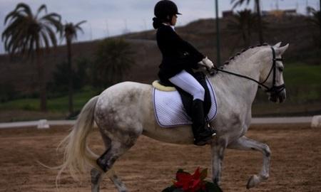 ¿Se ha de apostar a un único 'caballo ganador'?