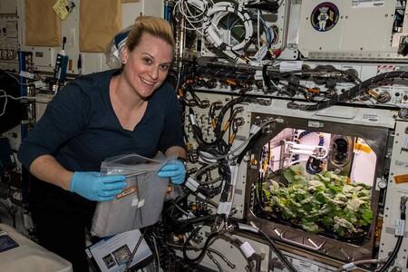 Estos son los primeros rábanos que se cultivan en la Estación Espacial Internacional