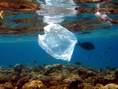 Estas bacterias podrían comerse el plástico de nuestro océanos