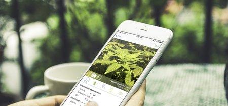 Feliz 420: tres redes sociales para los amantes de la marihuana