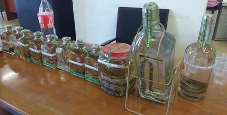 Reptiles Dentro Botellas Mezcal Oaxaca