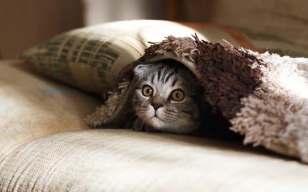 gato a tope