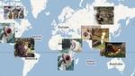Lugares del mundo donde te pueden comer vivo