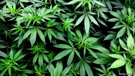 Fue arrestado el creador de la criptomoneda respaldada por chile habanero que quería ser usada para comprar marihuana en México