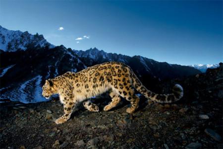 Aperture y el Leopardo de las nieves a 3600 metros de altura