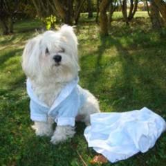 Foto 2 de 6 de la galería the-puppi-catwalk en Trendencias