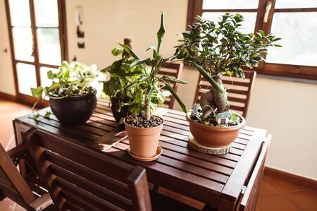 Consejos para recuperar las plantas tras las vacaciones