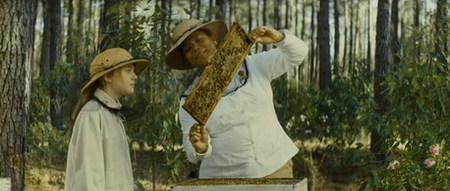 'La vida secreta de las abejas', blando melodrama