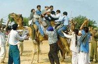 El Festival del Sahara