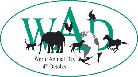 Hoy es el Día Mundial de los animales