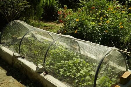 Mini Green House Farming 5990483 1920