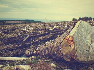 Más de 2.000 especies de animales y plantas podrían desaparecer por deforestación en Colombia