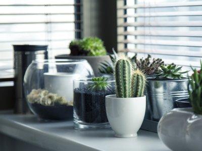 17 ideas para decorar con cactus este otoño