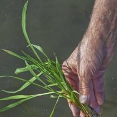 Foto 5 de 14 de la galería la-produccion-de-los-cereales-con-base-de-arroz en Vitónica