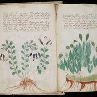 """El manuscrito Voynich: el misterio del """"libro que nadie ha podido leer"""" puede estar a punto de resolverse"""