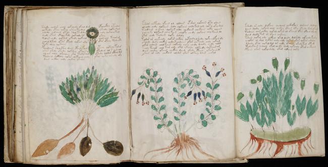 Voynich Manuscript 170