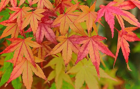 Sácale los colores al otoño
