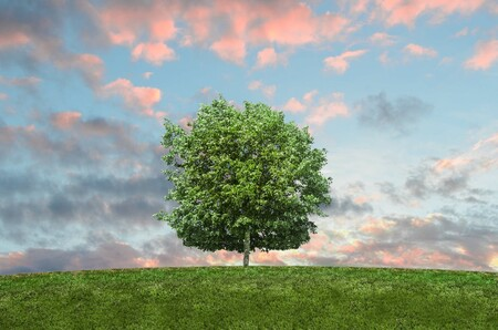 Qué es el impacto ambiental y cómo reducirlo con estas 7 sencillas acciones que puedes realizar diario desde casa