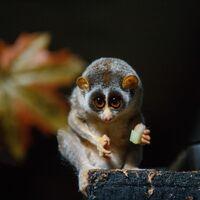 Madagascar se está dividiendo en pequeñas islas a razón de siete milímetros al año