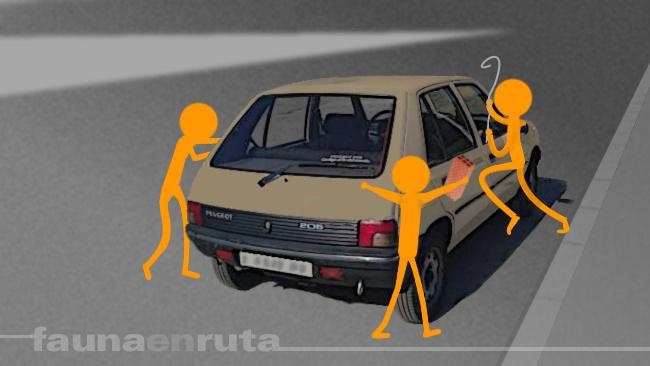 fauna en ruta: dejarse las llaves dentro del coche