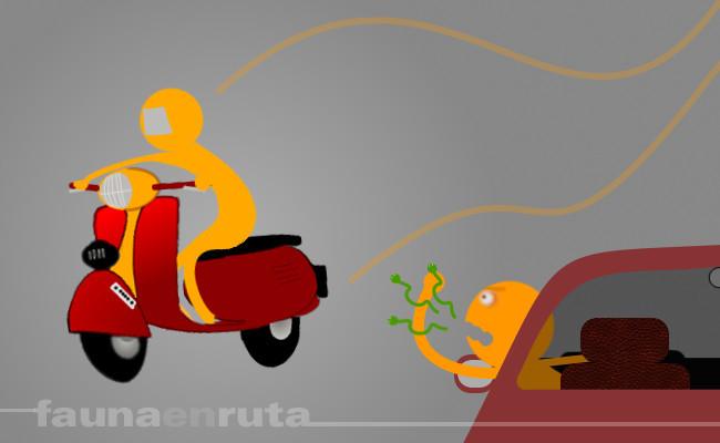 fauna en ruta: motolistos y enlatados