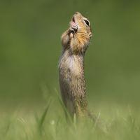 ¿Tienes un mal día? Prueba con las divertidísimas finalistas de los Comedy Wildlife Photography Awards