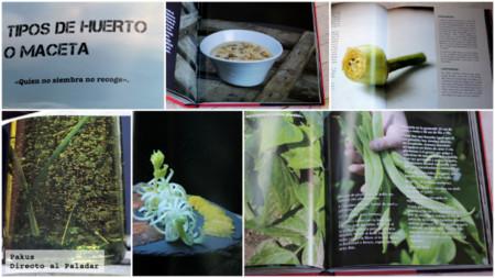 Libro Floren1