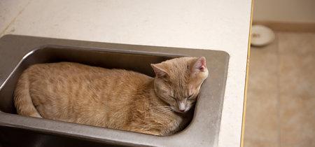 Respondiendo a la pregunta que me hizo ganar el Premio Ig Nobel: ¿son los gatos líquidos?