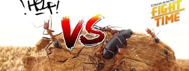 El canal Youtube de 'El mundo de las hormigas' demuestra que los insectos ya son mainstream