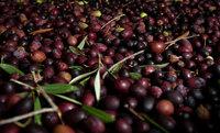 Países de fuera de la Unión Europea dificultan la importación de aceite de oliva