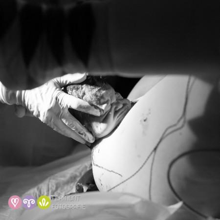 006 Head Born Fermont Fotografie