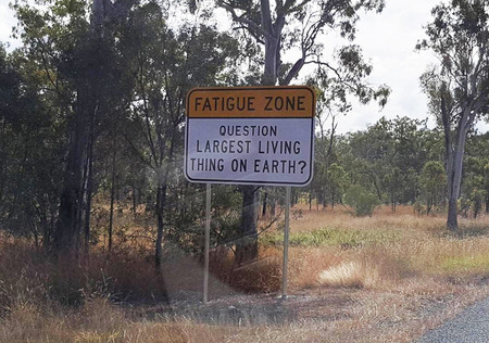 Trivia Road Signs Australia 59acf480d9f88 700